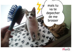 Luciole, chat
