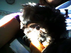 Lucky, chien