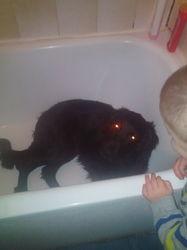 Lucky, chien Labrador Retriever
