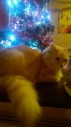 Lucy, chat Gouttière