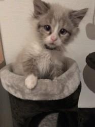 Luffy, chaton