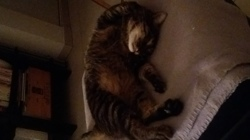 Luigi, chat Gouttière