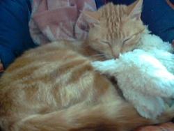 Lulu, chat Gouttière