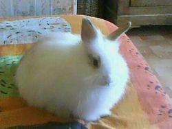 Lulu, rongeur Lapin