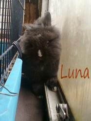 Luna, rongeur Lapin
