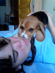 Luna, chien Beagle