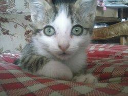 Mystère, chat Gouttière