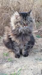 Luna , chat Gouttière