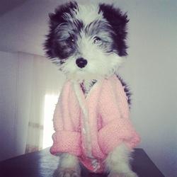 Luna, chien