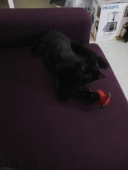 Luna, chat