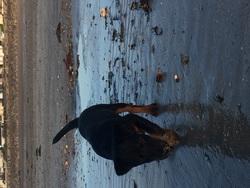 Luna, chien Jagdterrier
