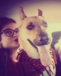 Luna, chien Berger allemand