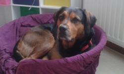 Luna, chien Rottweiler