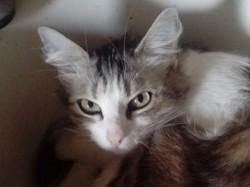 Luna, chat Gouttière