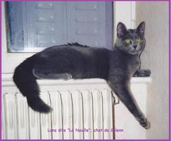 Luna Dite La Nouille, chat