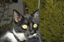 Lune, chat Gouttière