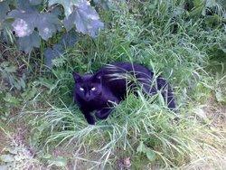 Lunette, chat Gouttière