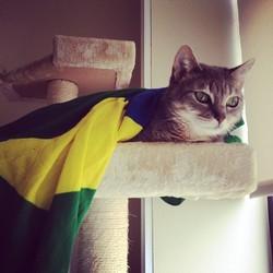 Lux, chat Européen