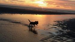 Lylia, chien Yorkshire Terrier
