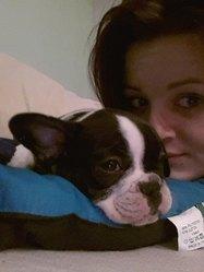 Lylou, chien Bulldog