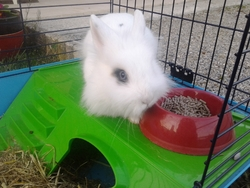 Lyly, rongeur Lapin