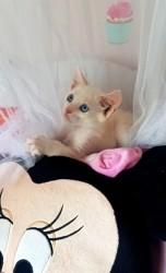 Lyly, chaton