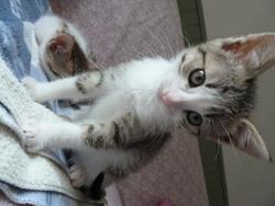 Lympia, chat Gouttière