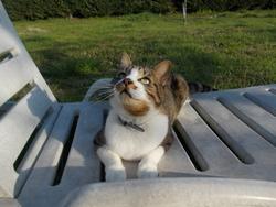 Lynus, chat Gouttière