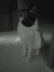 Lyor, chat Gouttière