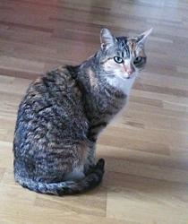 Lyra, chat Gouttière