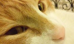 Biscotte, chat Gouttière