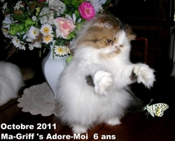 Ma-Griff's Adore-Moi, chat