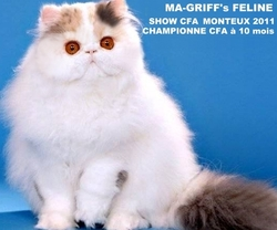 Ma-Griff's Feline, chat