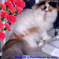 Ma-Griff 'S Flashdance, chat