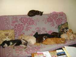 Mabrouck,stephy,tomy,caramel, chien Caniche