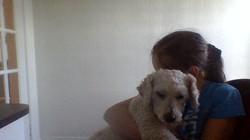 Mac, chien Caniche