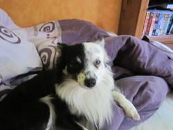 Mac Gee, chien