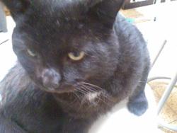 Macadam, chat Gouttière