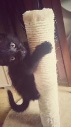 Macaron, chat Gouttière