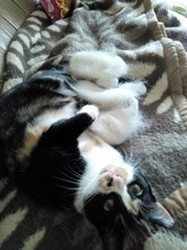 Macha, chat Gouttière