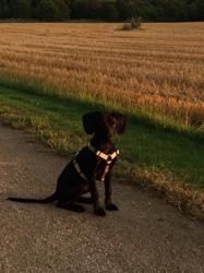 Mack, chien