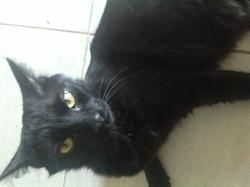 Mackenzy, chat Gouttière