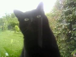 Mactaylor, chat Gouttière
