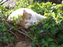 Macy, chat Gouttière
