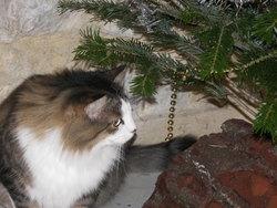 Mada, chat Gouttière