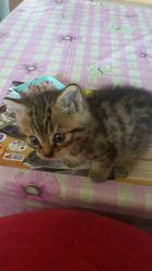 Madison, chat Gouttière