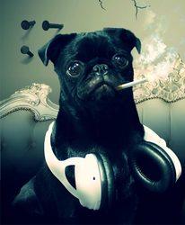 Mady, chien Carlin