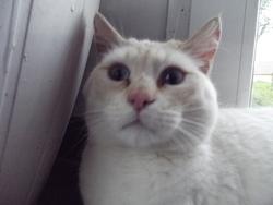 Maelys, chat Gouttière