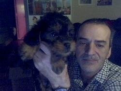 Maggie, chien Yorkshire Terrier