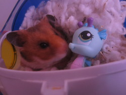 Maggie, rongeur Hamster